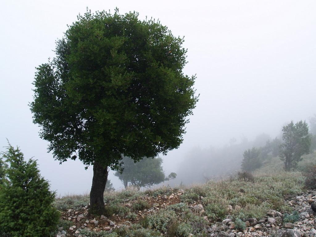 Crtica iz creske toponimije – fitotoponimi Tramuntane