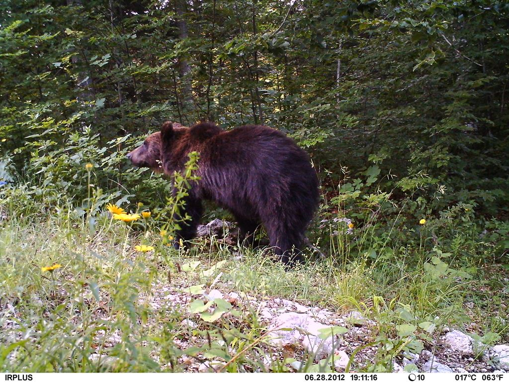 """Poziv na početnu konferenciju projekta """"Centar za posjetitelje o velikim zvijerima"""""""