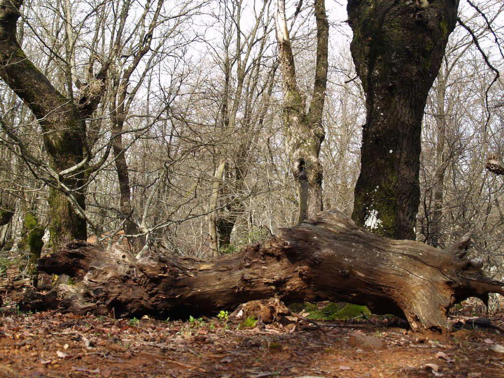 Međunarodni dan šuma, 21. ožujka 2019.