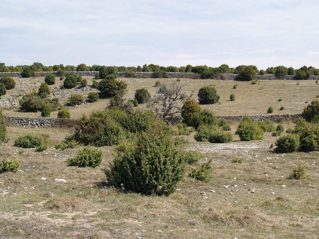 Krajobrazna cjelina Središnja pašnjačka zaravan