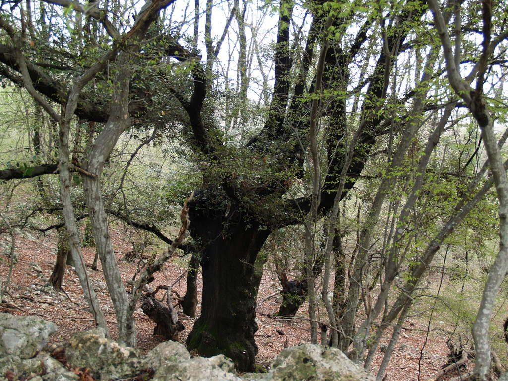 Krajobrazna cjelina Trmuntana