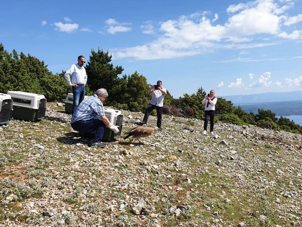 Četiri se oporavljena supa vinula u nebo nad Primorjem