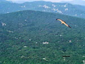 U letu iznad Tribaljskog grebena