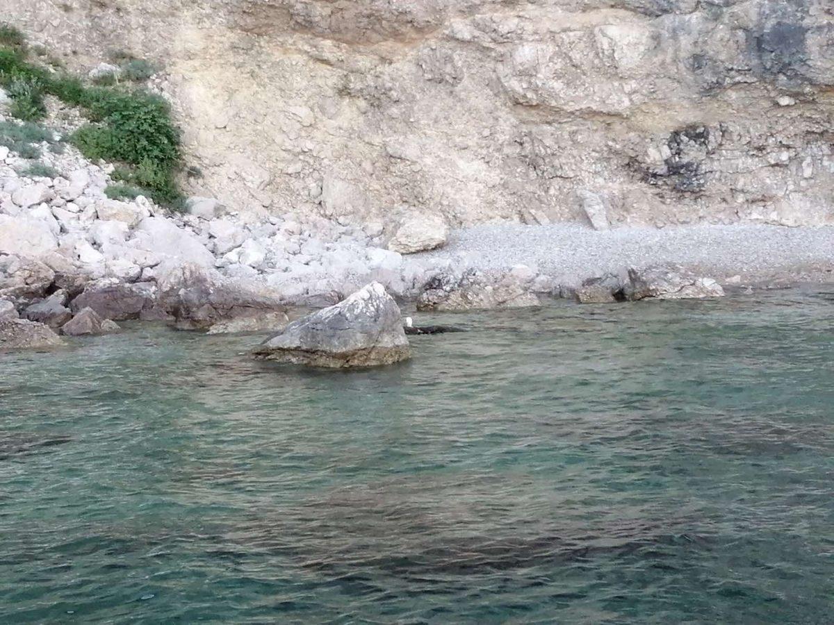 Spašena dva supa s litice Kargadur u sjevernom creskom ornitološkom rezervatu